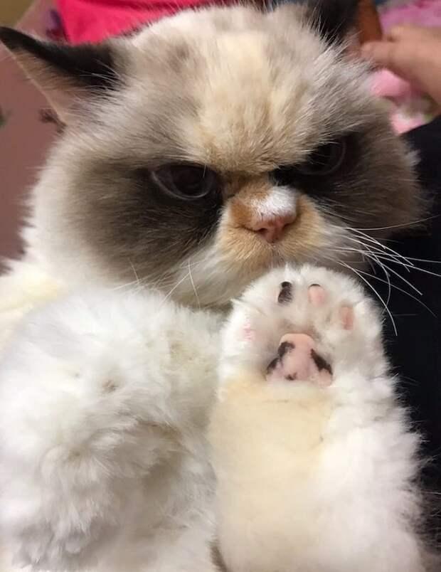Кошка и лапа