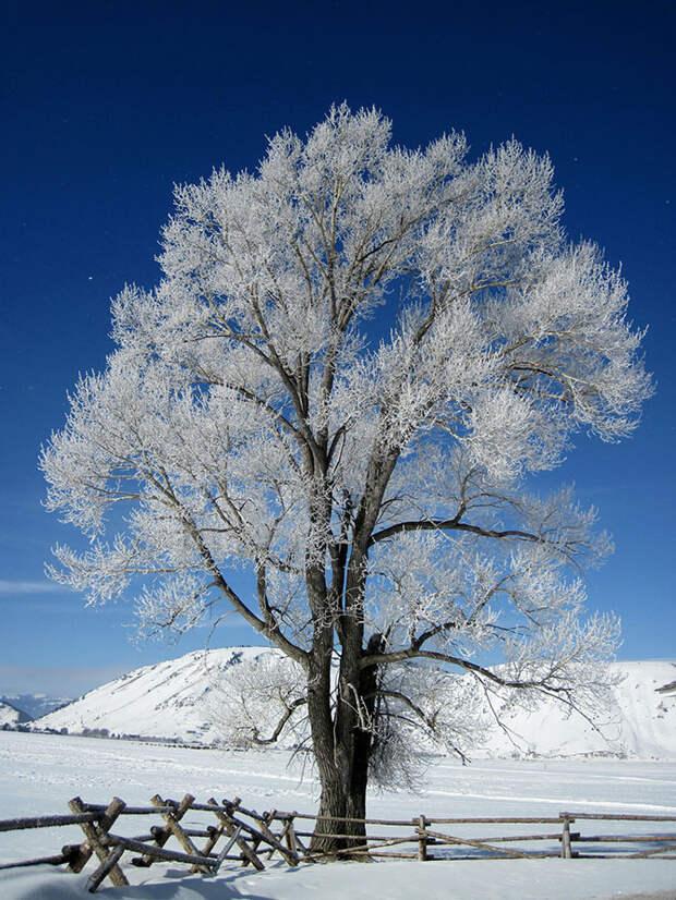 Мороз-художник: шедевры природы
