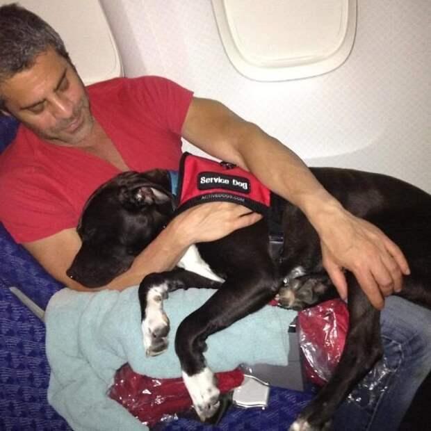 В тесноте, да не в обиде! животные, забавно, летайте самолетами, мило, пассажиры, самолет, собаки, хвостатые пассажиры