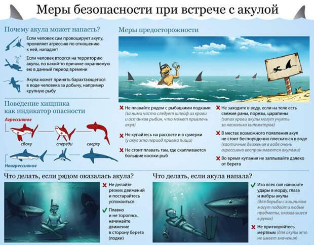Меры предосторожности при встрече с акулой