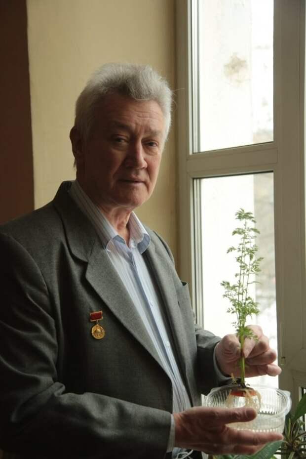 Пенсионер из Сокола выращивает свежую зелень из корешков овощей