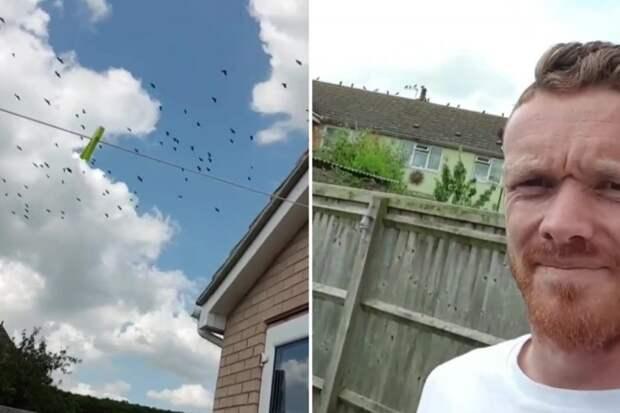 Черная месть: он заманил на газон соседа 300 ворон, чтобы они его обгадили