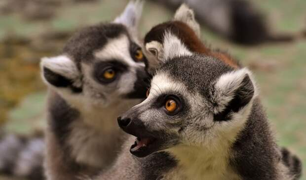 ВОренбурге наказали организатора выставки диких экзотических животных