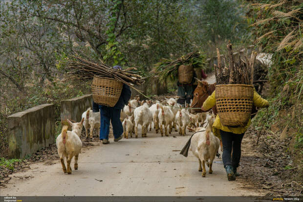 Как в Китае искоренили нищету