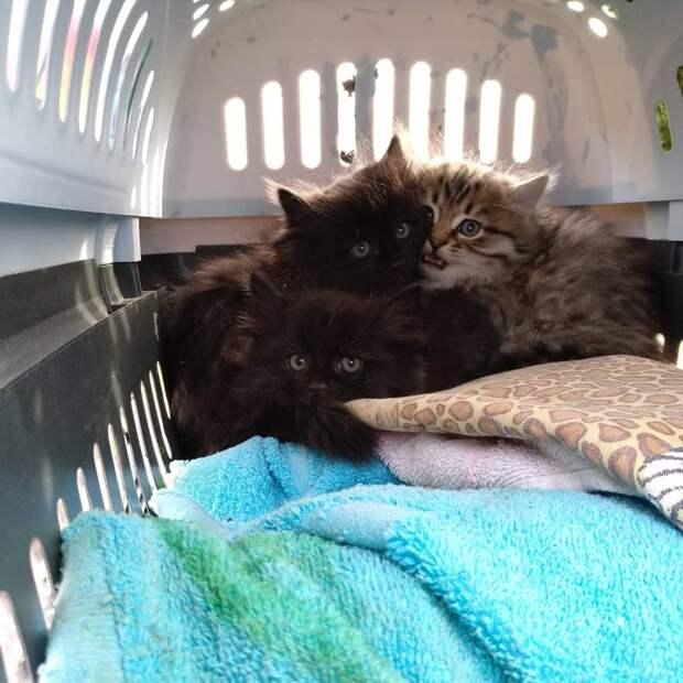 В пустом доме на заброшенной турбазе сидел котенок. Заметив одинокого кроху, парень вернулся его спасать