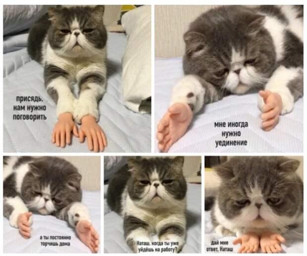 Подборка веселых мемов о котах, которых уже достал этот карантин!