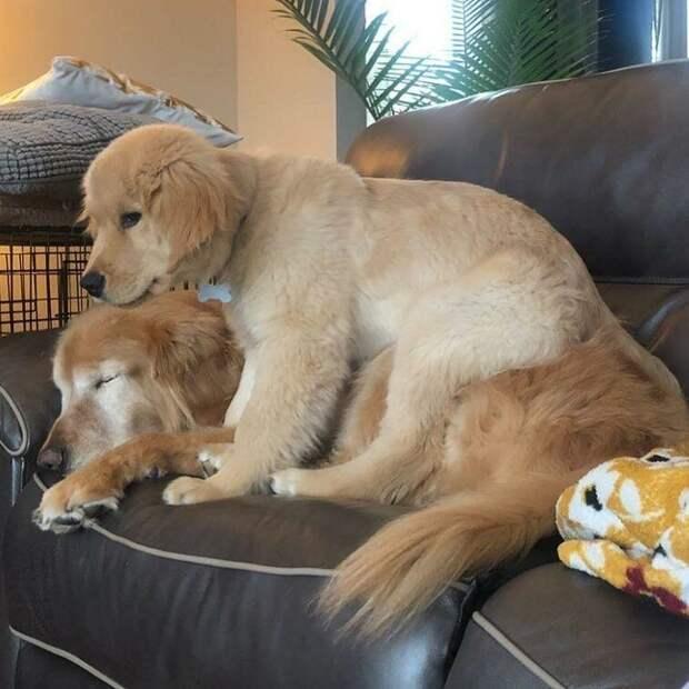 Поэтому его хозяйка Челси приняла решение добро, друзья, животные, зрение, история, милота, собака