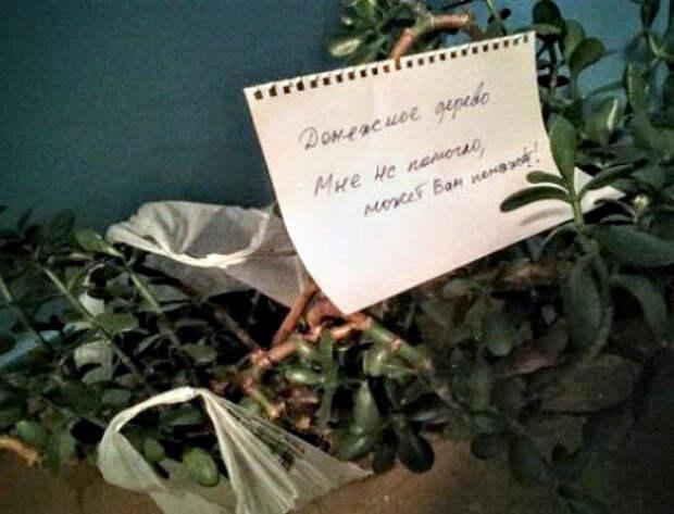 Срежу все листья и буду расплачиваться в магазинах.