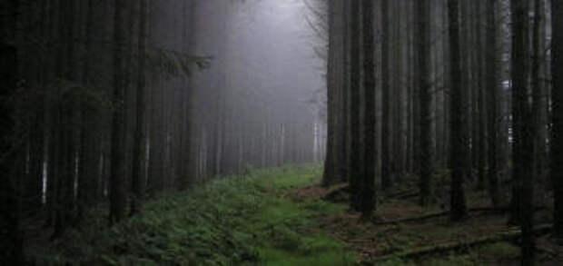 В лесу Трансильвании бродят призраки и пропадают люди