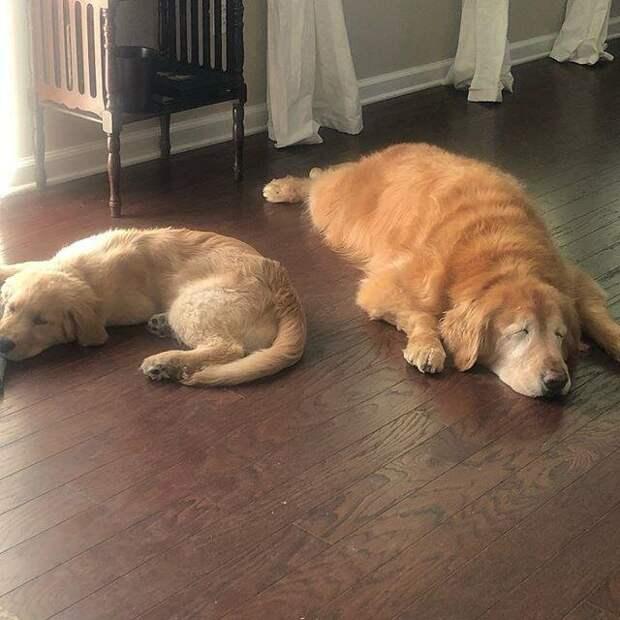 Они лучшие друзья! добро, друзья, животные, зрение, история, милота, собака