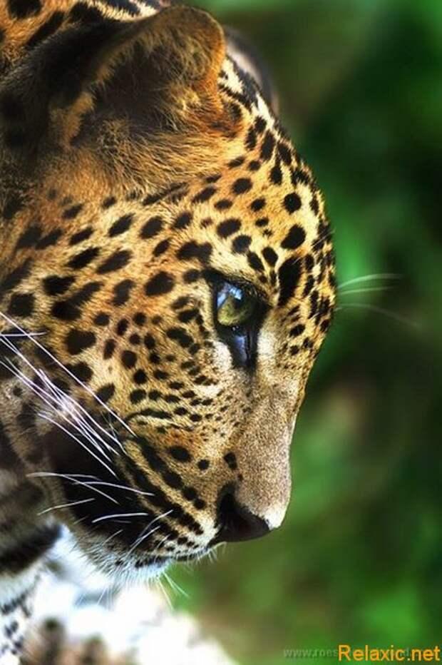 animals_nature_045