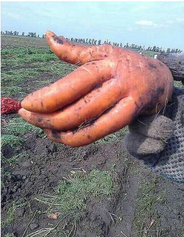 Морковка с бриллиантом