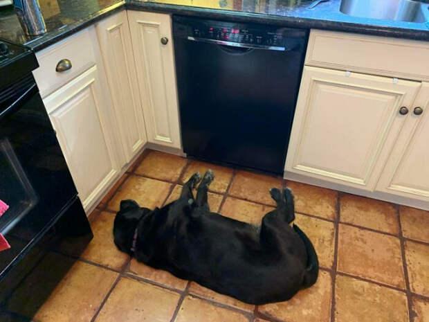 """14 собак, которые """"сломались"""" и требуют """"перезагрузки"""""""