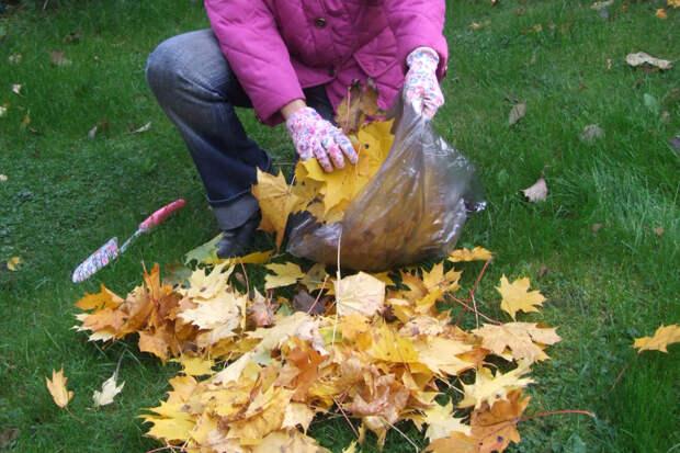 1. Насыпаем  в мешок некоторое количество опавших листьев.
