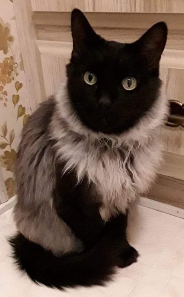 Как вам мой свитер? животные, коты, смешные картинки, юмор