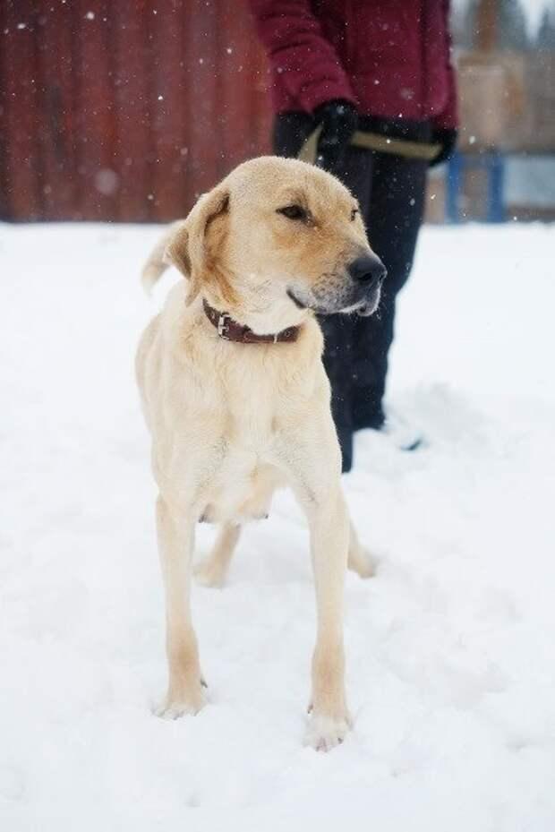 Грибники наткнулись в лесу на обессиленную собаку и 8 ее щенят гончая, порода, собака, щенки, щенок