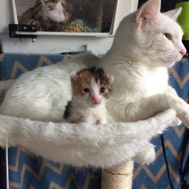 Два приютских котенка с трудной судьбой стали спасением друга для друга дружба животных, история, история спасения, коты, котята, кошки, спасение животных