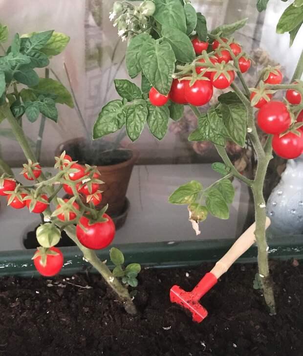 Как мини-огород поможет восполнить витамины зимой?