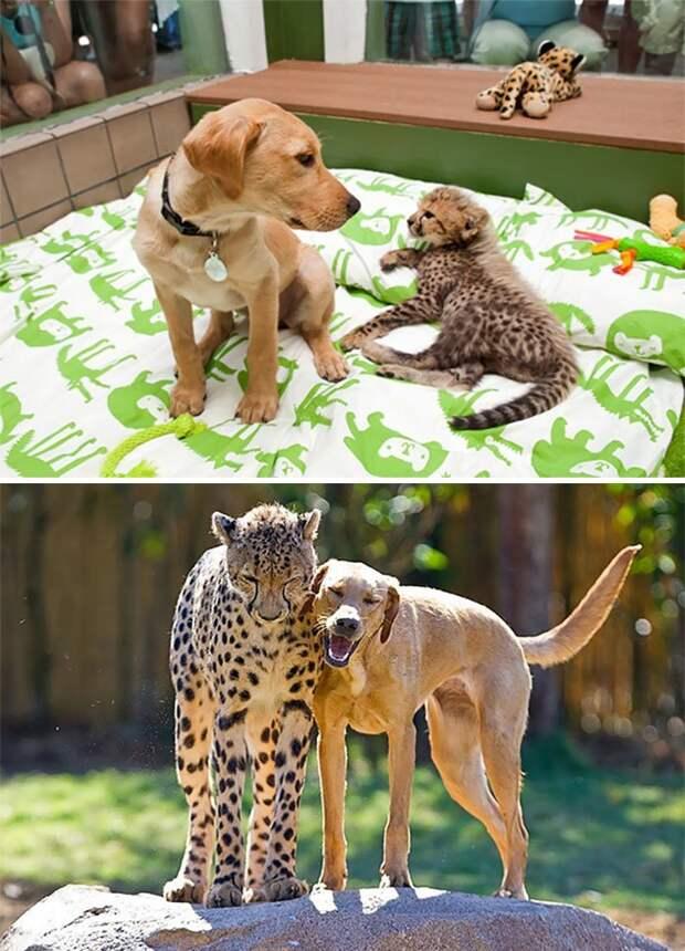 Дружба животных дружба, дружба животных, животные, кошки, о животных, собаки