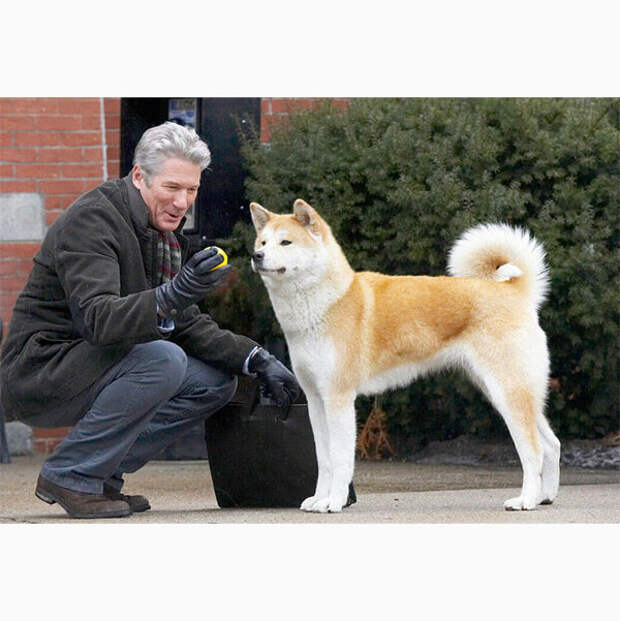 Скажите «гав»: самые милые и обаятельные собаки в кино