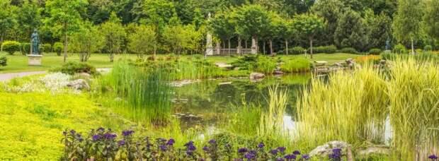 злаковый сад