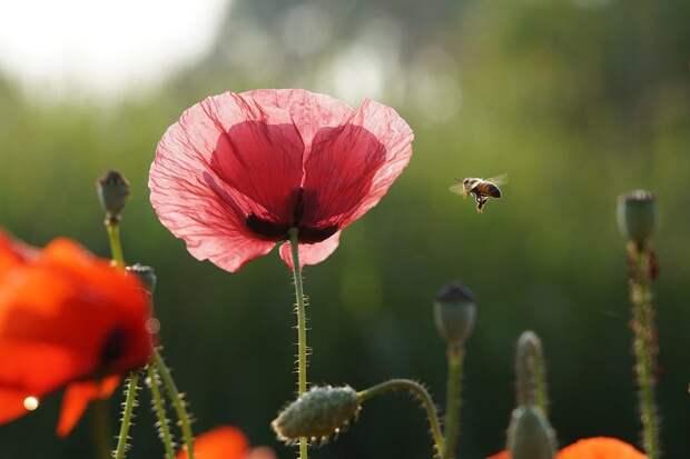 Более 1 млн рублей возместили потерявшим пчел пасечникам Удмуртии