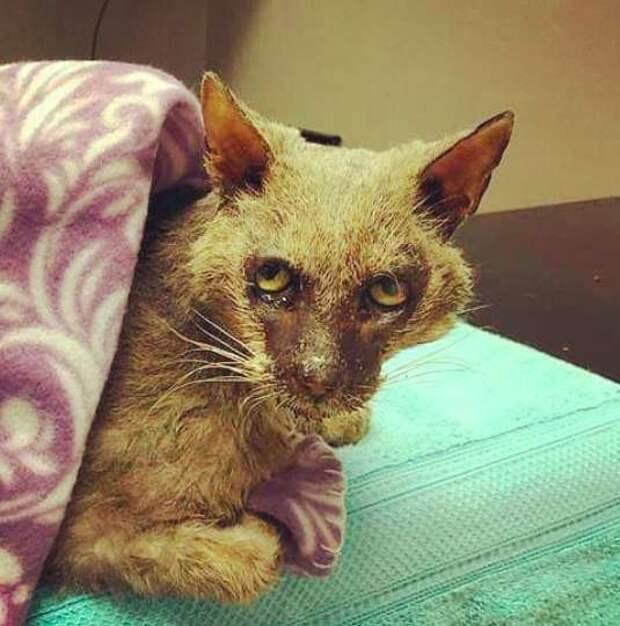 Во Флориде спасли кота, похожего на оборотня