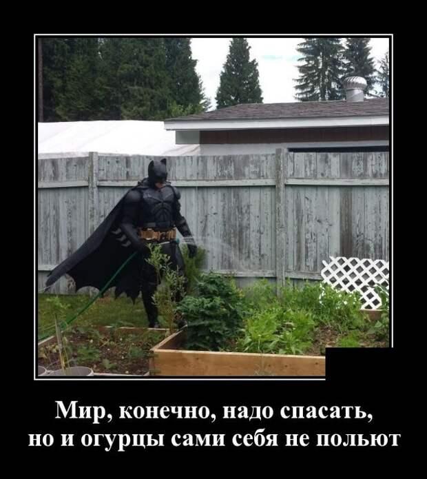 Демотиватор про Бэтмена и огурцы