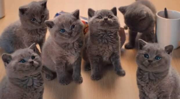 Котики и печенье