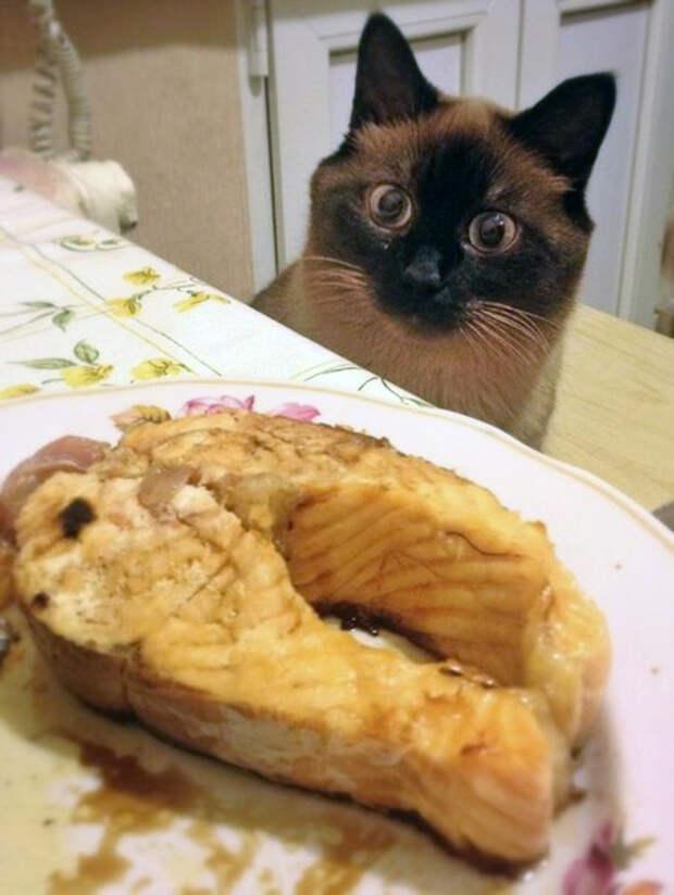Как выпросить еду у хозяина