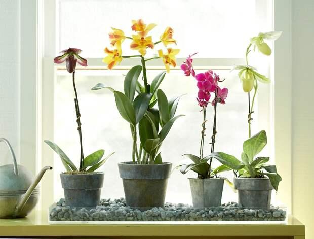 Как поливать орхидеи, чтобы получить красивые цветы