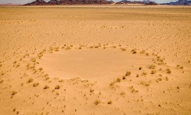 Ученые разгадали тайну «кругов фей» в пустыне Намиб