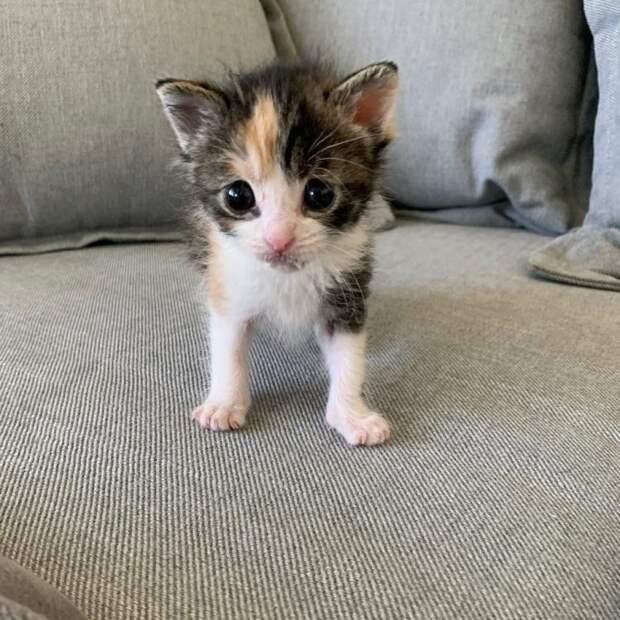 Котенок Замарашка, которая очень хотела жить