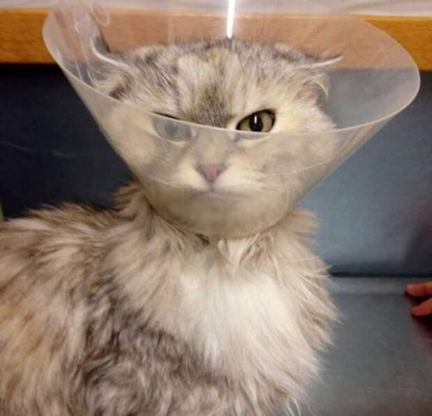 Трогательные примеры, как ветеринарный конус меняет жизнь животных