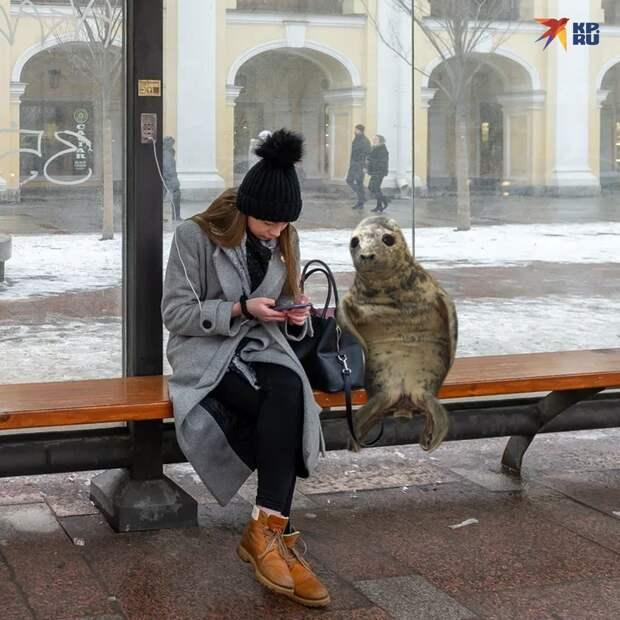 Тюленю не удалось сбежать из петербургского центра реабилитации