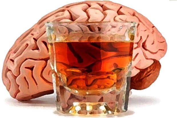 Вред алкоголя? Алкоголь не разрушает мозговые клетки!