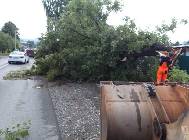 За прошедшую ночь с улиц Ижевска убрали 10 поваленных деревьев