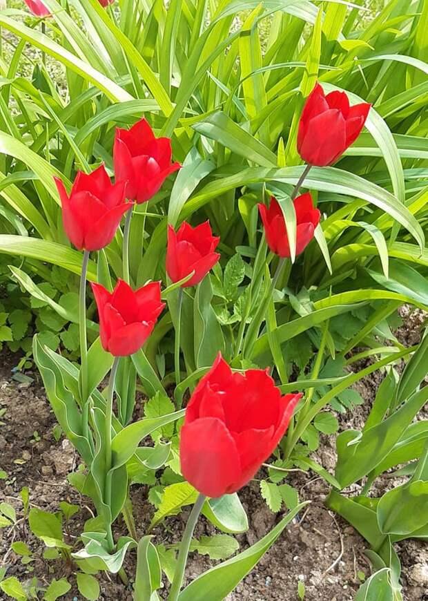 Во дворе дома на 9-й Северной линии образовался сиренево-тюльпановый аромат