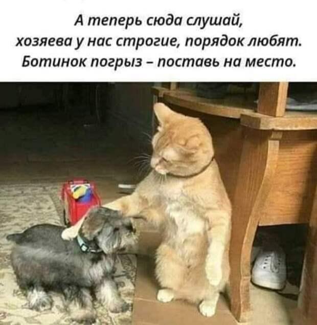 Возможно, это изображение (собака и текст «A теперь сюда слушай, хозяева y нас строгие, порядок любят. ботинок погрыз- поставь на место.»)