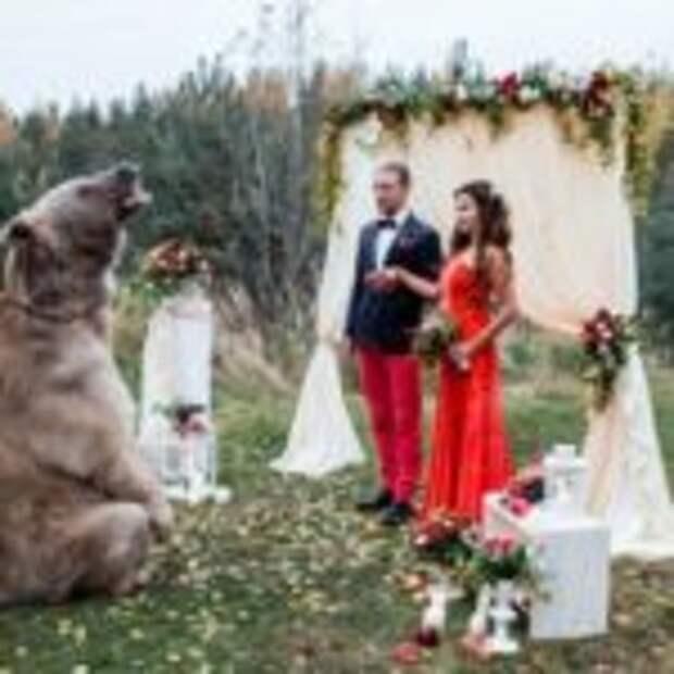 Бурый медведь Степан скрепил узы московских молодоженов