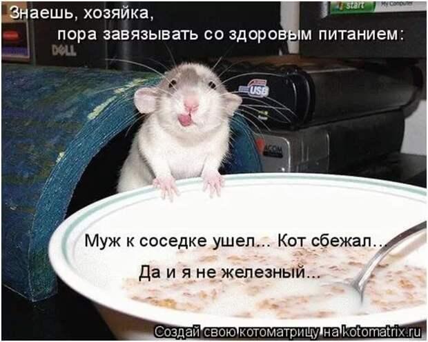 Немного о мышах и здоровом питании