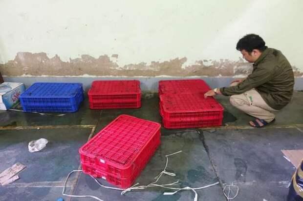 Разноцветные ящики привлекли внимание полиции… А внутри сидели животные, которым не выжить без помощи!