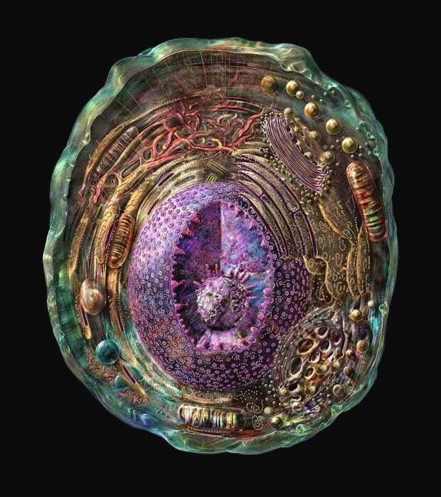 Сверхсовременные механизмы в живых клетках