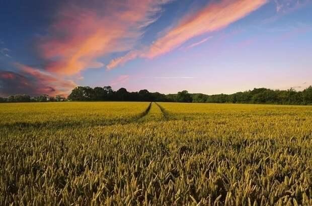 Органические удобрения предлагают исключить из списка агрохимикатов