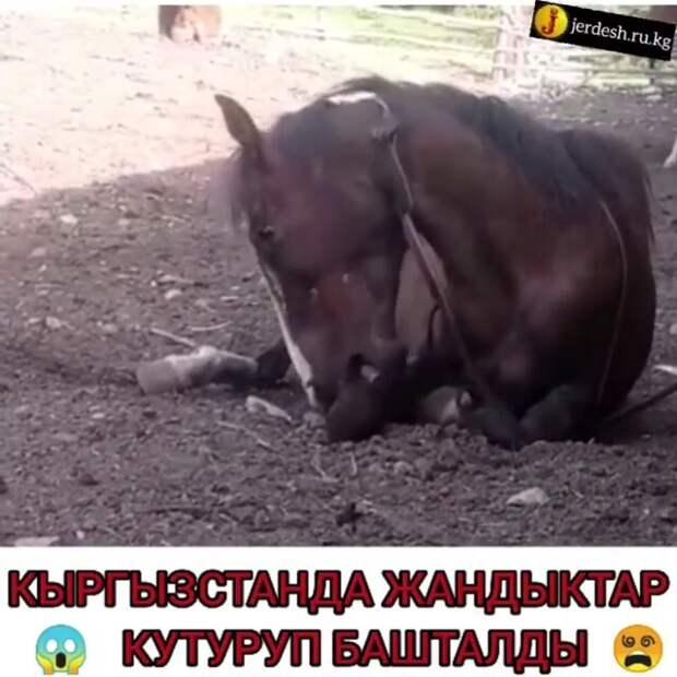 В Казахстан не ввозили мясо зараженного бешенством скота из Кыргызстана