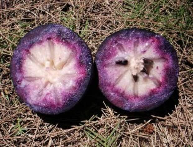 Знакомимся с экзотическими фруктами (Ч. 7-я)