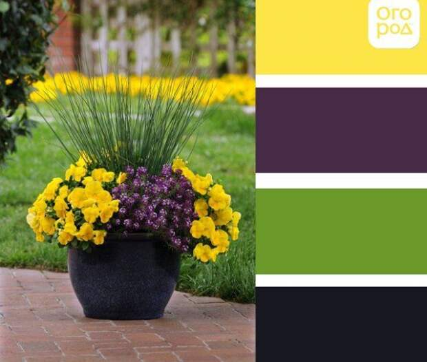 контейнер с желтыми и темно-фиолетовыми цветами, желто-фиолетовая клумба