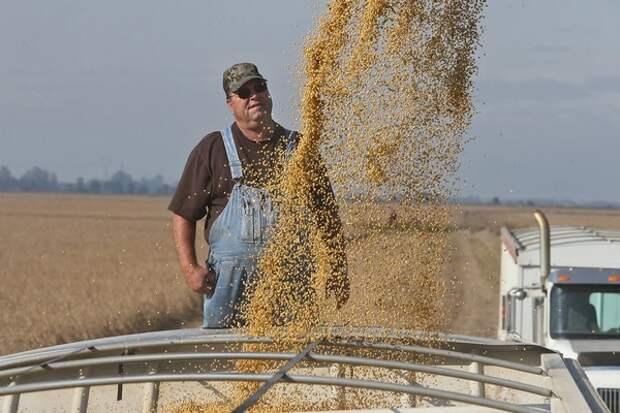 Фермеры в США в панике: Китаю больше не нужна американская сельхозпродукция