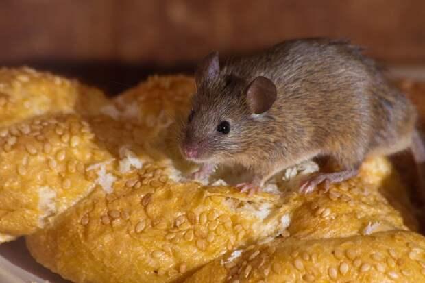 Вооружённые полицейские спасли мышь от голода