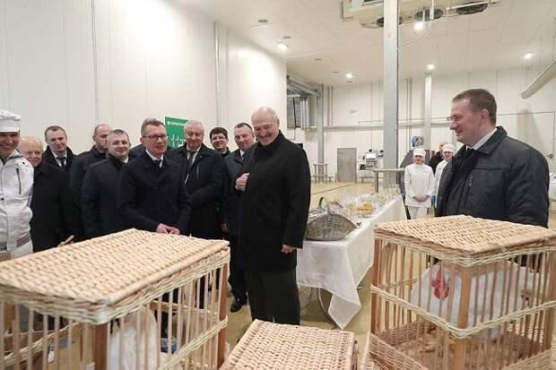 Лукашенко: Мыпонимаем, что такое петух, который топчет кур